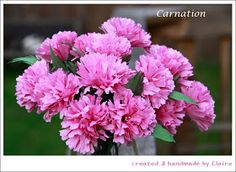 Claire's paper craft: Paper Carnation-Mother's Day