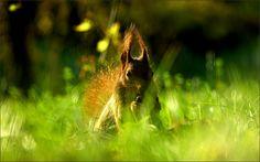 Eichhörnchen in der Maiwiese - Jahreszeiten - Galerie - Community