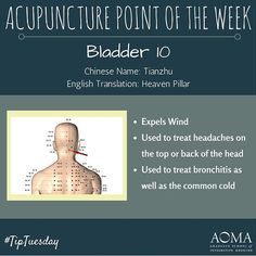 #TipTuesday:#Acupuncture Point of the Week, Bladder 10! #integrativelife                                                                                                                                                                                 More