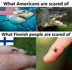 Täg someone who is scared of those things . Finnish Memes, Meanwhile In Finland, History Memes, Funny Memes, Memes Humor, Haha, Hetalia, Food Pictures, I Laughed