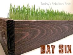 Today's Fabulous Finds: Rustic Wood Planter--Watch with me as the [wheat] grass grows! Fence Slats, Cedar Fence, Dream Garden, Home And Garden, Grass Centerpiece, Growing Wheat Grass, Painted Sticks, Wood Planters