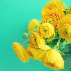 Yellow flowers on a blue background -- this would be a gorgeous beginning for a party color scheme