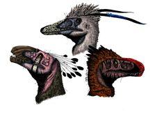 Left - Achillobator; Middle - Austroraptor; Right - Utahraptor.