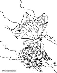 go green and color online this colorful butterfly coloring page beautiful coloring sheet about nature