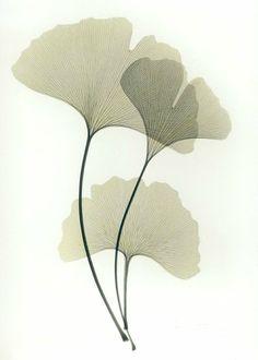 栗子头的相册-Albert Koetsier