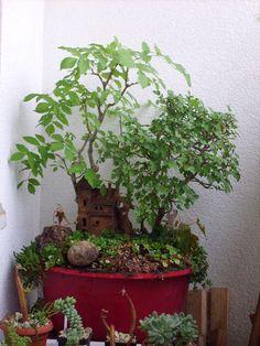 malá zahrada s domem- R.Kaiserová
