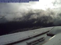 Hurricane Ridge(Olympic National Park)