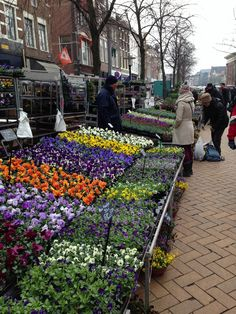 Flowermarket Groningen - I miss this! I had flowers in my room all the time.