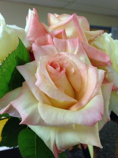 Ombré pink-cream roses Cream Roses, Girly, Flowers, Plants, Pink, Beautiful, Roses, Women's, Girly Girl