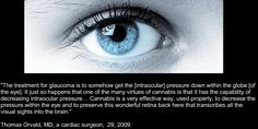 Cannabis and Glaucoma #medical #marijuana #cannabis #glaucoma #health #medical #cbd #thc