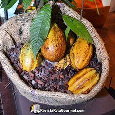 El origen de mi pasión! #chocolate  #cacao Reposted Via @fotolibre