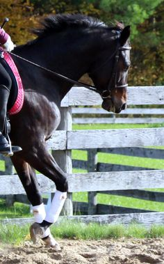 """Five Steps To Transforming Your Horse's """"Give To The Bit""""    By Horse Listening"""