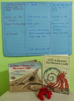 Hermit crabs and ocean theme ideas