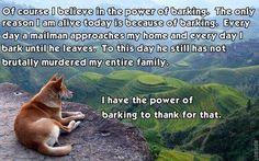 Canine Philosophy ~