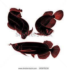 Arowana ryby výkres set vektorové ilustrácie - Stock vektor