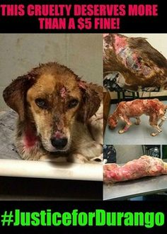 Citizens angered over ridiculously low fine given to dog abuser