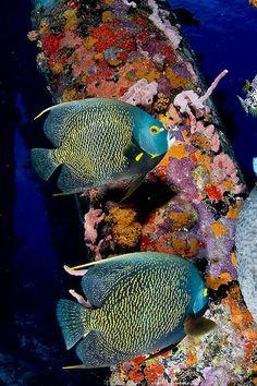 Mermaid's Dive: Under the Sea Bonaire Salt Pier Underwater Creatures, Underwater Life, Ocean Creatures, Colorful Fish, Tropical Fish, Small Fish Tanks, Fauna Marina, Life Under The Sea, Beautiful Sea Creatures