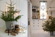 these little trees are so cute but I also really like metal tubs they are in... It would be awesome to use these at Christmas and then plant them in the yard after..