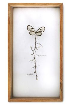 """""""Golden root butterfly"""". This butterfly was missing its body and I added the…"""