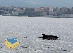 Os golfiños volven á ría polo Nadal