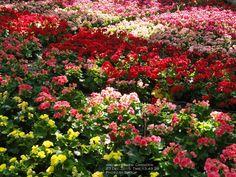 Flower festival Chiang Rai Municipality