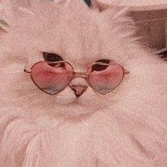 H cats pets cute – Wallpaper Cat Aesthetic, Aesthetic Collage, Aesthetic Vintage, Angel Aesthetic, Aesthetic Clothes, Bedroom Wall Collage, Photo Wall Collage, Picture Wall, Aesthetic Pastel Wallpaper