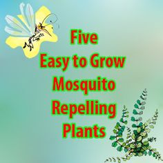 Farming & Agriculture: 5 Easy to Grow Mosquito Repelling Plants Lord knows we need that in the summer.