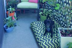 Outdoor Dog Bed for Balcony