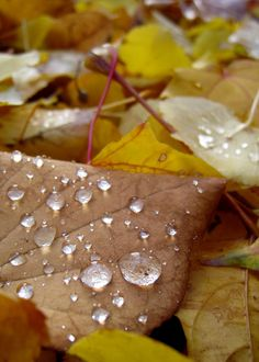 Dew drops on fall leaves