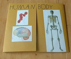 If you're studing the human body, a great learning tool is the lapbook. Take a look at this lapbook made by Jimmie's daughter, Sprite, while in first grade. She was using the Sonlight Science 1 cur. Science Topics, Preschool Science, Science Classroom, Science Lessons, Teaching Science, Science Activities, Science Projects, Life Science, Science And Nature