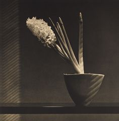 View Hyacinth by Robert Mapplethorpe on artnet. Browse upcoming and past auction lots by Robert Mapplethorpe. Andre Kertesz, Robert Mapplethorpe Photography, Art Pictures, Photos, Tv Movie, Still Life Images, Cult, Celebrity Portraits, Black And White Portraits