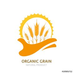 Vector: Human hand holding wheat ears and sun. Vector logo, label, package design elements. Barley, or rye illustration. Concept for agriculture, organic cereal products, harvesting grain and farming.