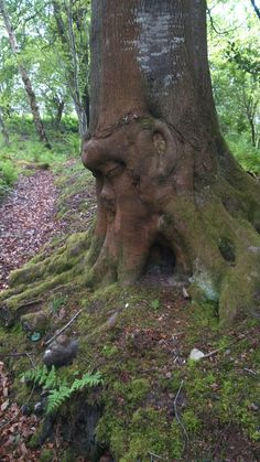 How is it faces find places in trees? Carved there or what?