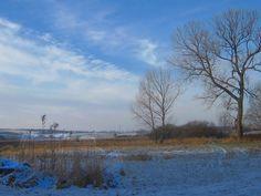 A little frost January