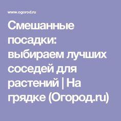 Смешанные посадки: выбираем лучших соседей для растений | На грядке (Огород.ru)