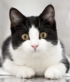 Cat Vaccinations: What Does My Pet Need? | PawNation