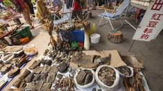 Petition · Ban the use of animal parts in chinese medicine. · Change.org