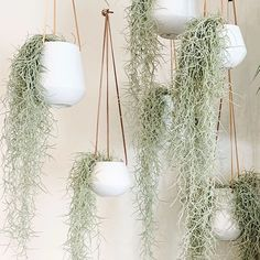Hanging Air Plants, Indoor Plants, Indoor Plant Wall, Hanging Plant Wall, Indoor Gardening, Shower Plant, Moss Decor, Air Plant Display, Plant Aesthetic