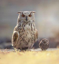 "Wildlife Planet (@wildlifeplanet) on Instagram: ""Twins | Photo by @Tanja_Brandt #WildlifePlanet"""