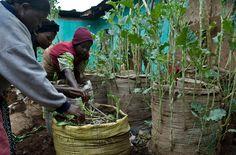 Kenia: Mini-Gärten gegen den Hunger | Kibera #urbangarden