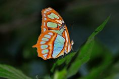 exotic butterflies - Google Search