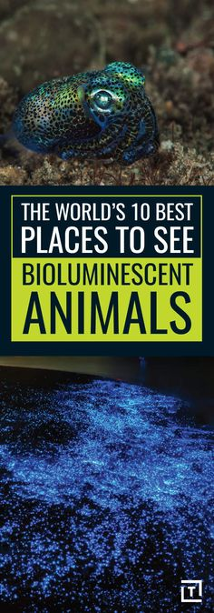 Don't miss these best places to see bioluminescent animals.