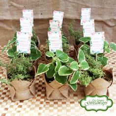 Variegated Oregano and Thyme Wedding favors!