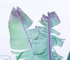 the green/purple colour mix of palms by margaux roy