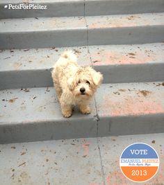 Take steps to success with Emanuel Pleitez for mayor of Los Angeles www.pleitezforla.com/petsforpleitez