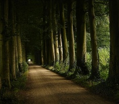 I wish this was my driveway.  An estate in Wezep, Holland.