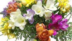 Εικόνες Τοπ:Οι καλύτερες ευχές για γιορτή. - eikones top Floral Wreath, Valentines, Wreaths, Plants, Decor, Valentine's Day Diy, Flower Crowns, Door Wreaths, Valantine Day
