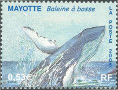 img/Monde cetaces/timbre cetaces - YT005_05 - Mammiferes marins - Baleine a bosse - Faune (Cetaces) -Timbre Mayotte.jpg
