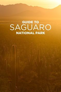 10 Things to Do in Saguaro National Park Tucson AZ.