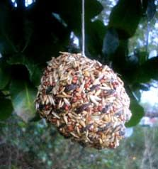 pine cone bird feeder · instructions from NZ Department of Conservation